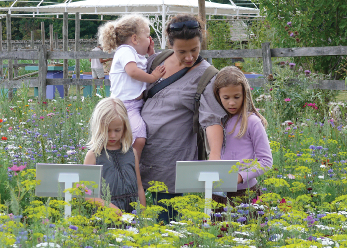 Nova Flore Champigné Les Hauts d'Anjou Solutions Naturelles Fleurissement Alternatif
