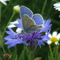 papillon NOVA FLORE PROFESSIONNEL CHAMPIGNE LES HAUTS D ANJOU PAPILLION
