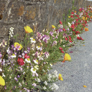 fleurir un pied de mur