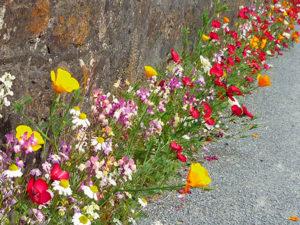 Vegetalisation Zone urbaine bio couv Pied de mur