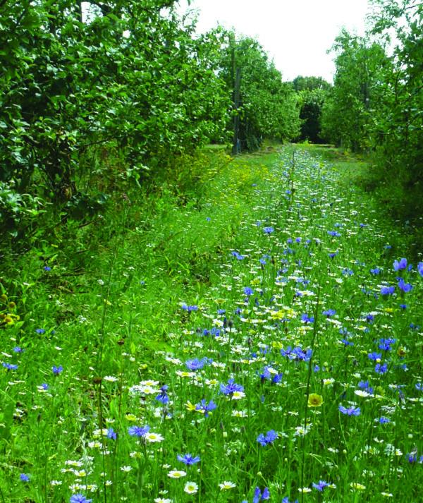 mélange inter rangs arboriculture