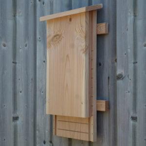 gîte pour pipistrelle